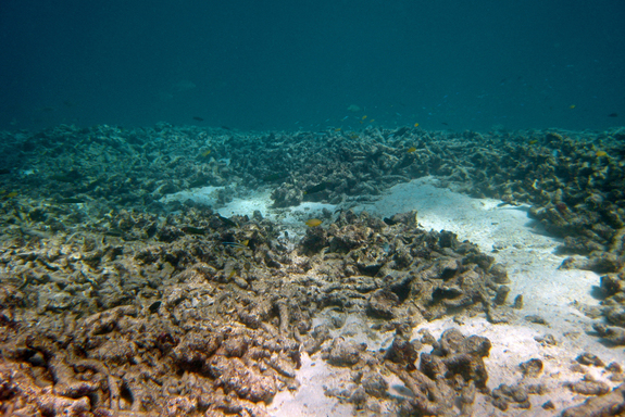 great-barrier-1-horseshoe-reef.jpg
